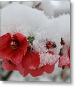 Frozen Flowers Metal Print