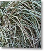 Frozen Grass - Ground Frost Metal Print