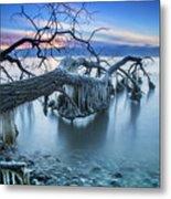 Frozen Morning 2 Metal Print