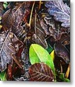 Frozen Oak Leaves, Glenveagh National Metal Print