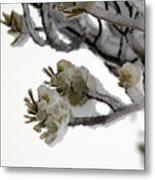 Frozen Pines 1 Metal Print