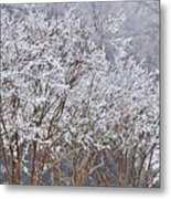 Frozen Trees During Winter Storm Metal Print