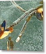 Frozen Water Lily Metal Print