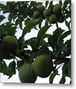Fruit And Sky_raindrops Metal Print