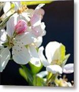 Fruit Tree Blossom Metal Print