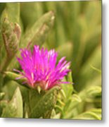 Fuchsia Bloom Metal Print