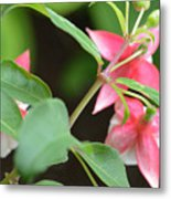 Fuchsia From Above Metal Print