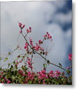 Fuchsia Mexican Coral Vine On White Clouds Metal Print