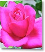 Fuchsia Rose Metal Print