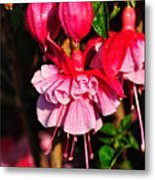 Fuchsias With Droplets Metal Print