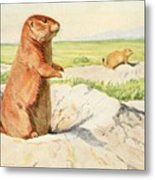 Fuertes, Louis Agassiz 1874-1927 - Burgess Animal Book For Children 1920 Prairie Dog Metal Print