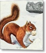 Fuertes, Louis Agassiz 1874-1927 - Burgess Animal Book For Children 1920 Red Squirrel Metal Print
