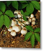 Fungal Appeal Metal Print