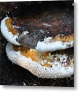 Fungi In Dew Metal Print