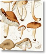 Fungi Metal Print