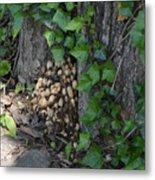 Fungus At Base Of Tree Metal Print