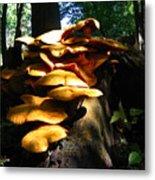 Fungus Colony 23 Metal Print