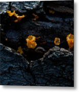 Fungus On Log Metal Print