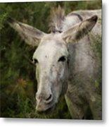 Funky Donkey Metal Print