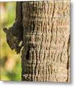 Funky Ear Squirrel Metal Print