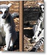 Funny Lemurs Metal Print