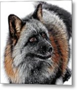 Funny Little Furry Face Metal Print