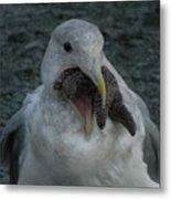 Funny Seagull With Starfish Metal Print