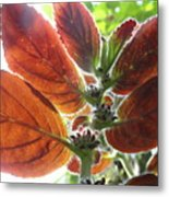 Furry Flora 2 Metal Print