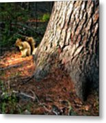 Furry Neighbor Metal Print