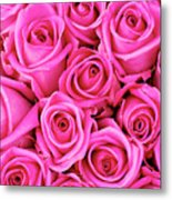 Fuschia Colored Roses Metal Print