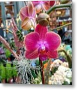 Fushia Orchid Metal Print