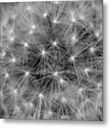 Fuzzy - Black And White Metal Print
