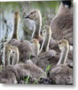 Fuzzy Butts2 Metal Print