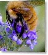 Fuzzy Honey Bee Metal Print