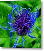 Fuzzy Purple Flower Metal Print