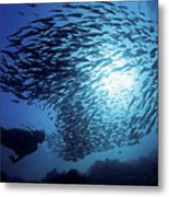 Galapagos Islands Diver Metal Print by Dave Fleetham - Printscapes