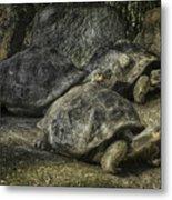 Galapagos Tortoise_hdr Metal Print