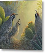 Gambel's Quail - Early Light Metal Print
