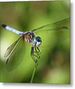 Garden Dragonfly Metal Print