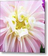 Garden Floral Art Pink Dahlia Flower Baslee Troutman Metal Print