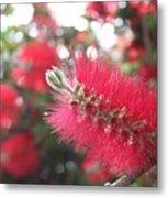 Garden Flower 6 Metal Print