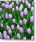 Garden Of Pink Tulips Metal Print