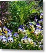 Garden Pansies Metal Print