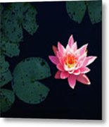 Garden Party For One Metal Print