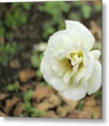 Garden Party Hybrid Tea Rose, White Rose Originally Produced By Metal Print