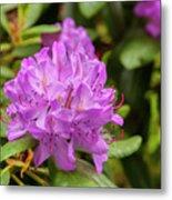 Garden Rhodoendron Plant Metal Print