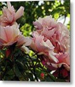 Garden Roses 2 Metal Print