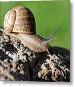Garden Snail Metal Print