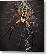 Garden Spider And Web Metal Print by Tamyra Ayles