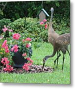 Garden Visitors Metal Print